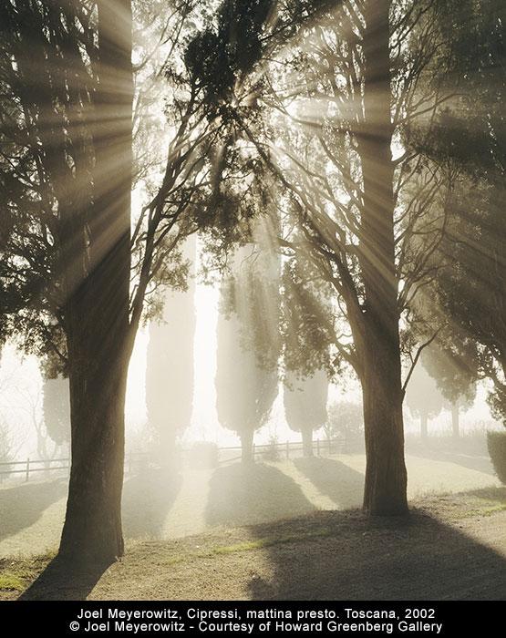 Joel Meyerowitz, Cipressi, mattina presto. Toscana, 2002 © Joel Meyerowitz - Courtesy of Howard Greenberg Gallery